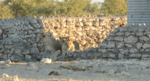 Day two in Etosha